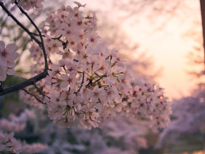 18-19 mai 2019 – La thérapie par le Yoga – Partie 2 : La santé émotionnelle